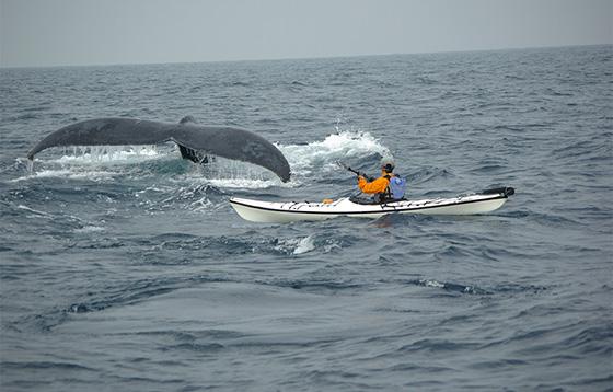 eye_kayak_whale_tour