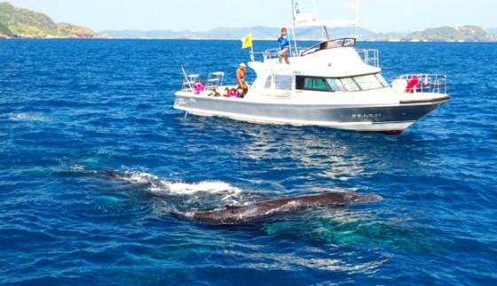 whale201801