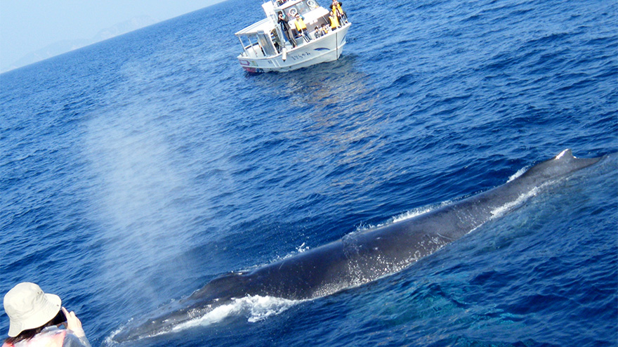 img_boatwhale_watching