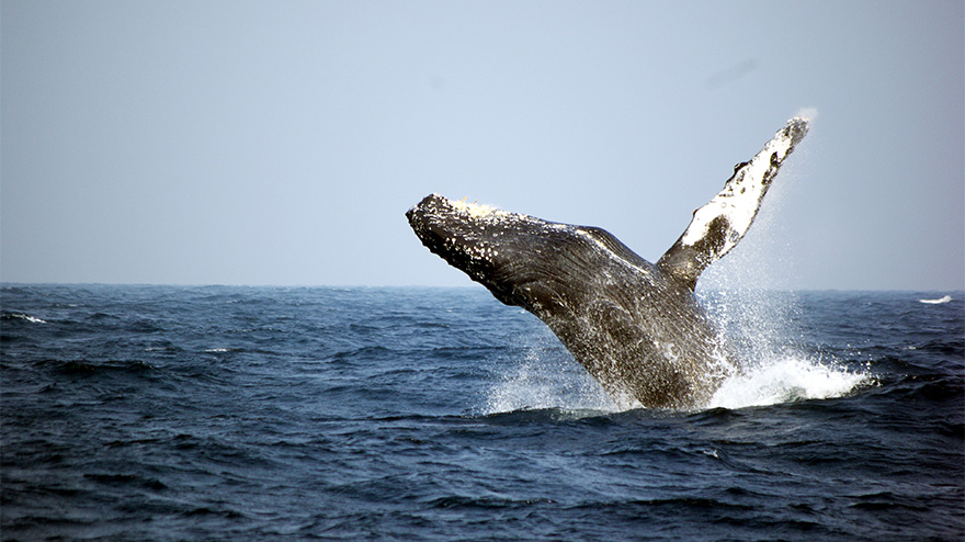 img_whale_watching